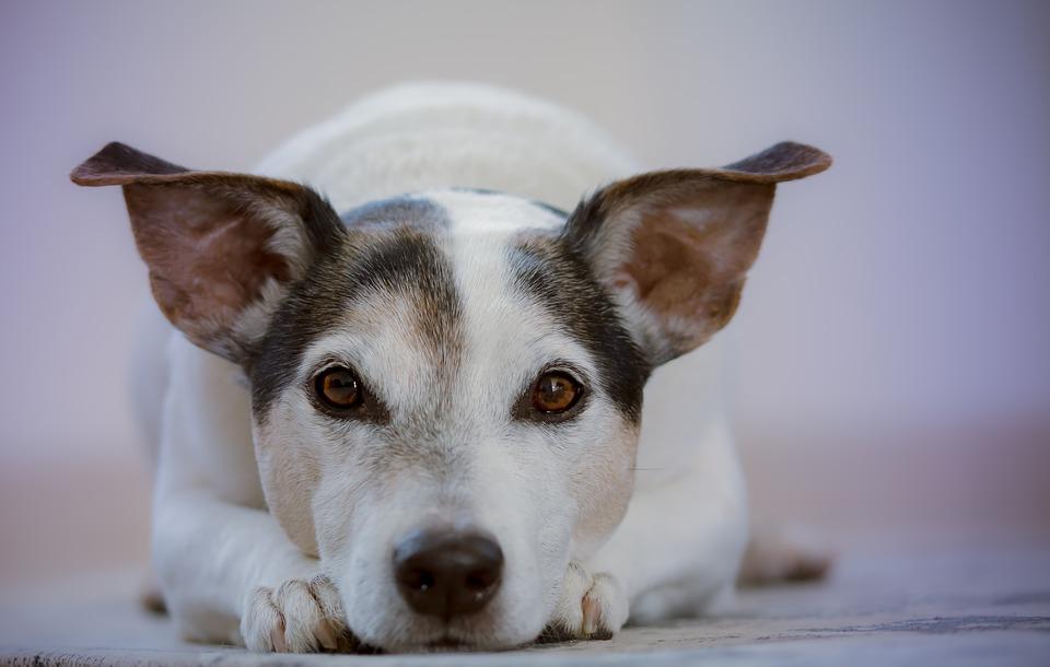 A l'Hospital Veterinari de l'Ebre, l'ajudarem a tractar la seva mascota amb la màxima cura