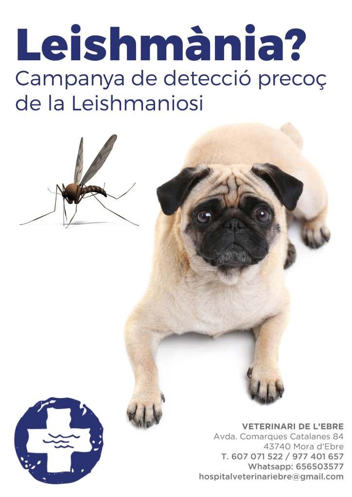 Apliquem el 20 % de descompte en els kits de detecció de la malaltia de la leishmaniosi