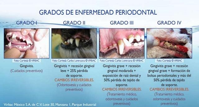 Graus de la periodontitis, no esperis a veure els símptomes, demana cita prèvia a La Clínica Veterinària de l'Ebre