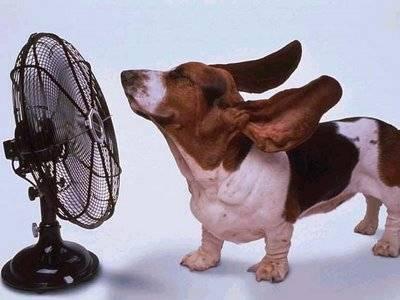 Podem col·locar un ventilador a baixa potència per a refrescar el nostre gos de manera gradual.