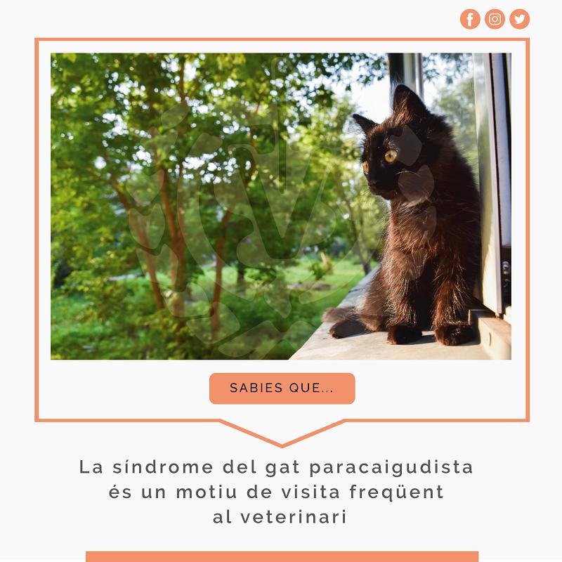 La caiguda al buit d'un gat, es considera una emergència veterinària greu.